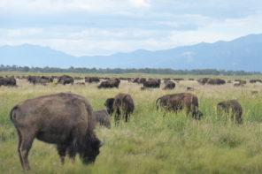 Où voir des animaux sauvages aux USA ?